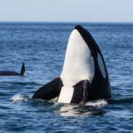 Tromso whale watching season
