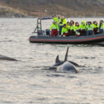 best whale watching tromso