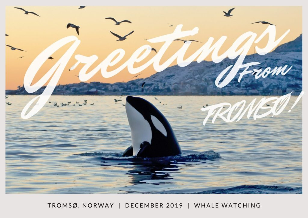 orca watching tromso