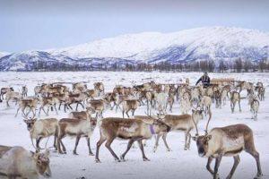 reindeer tour tromso