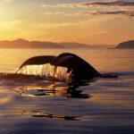 whale tour tromso